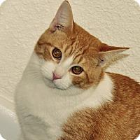Adopt A Pet :: quentin - Lakeland, FL