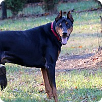 Adopt A Pet :: FOSDICK - Greensboro, NC