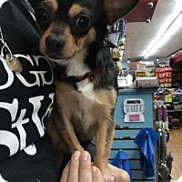Adopt A Pet :: Pepe - Philadelphia, PA