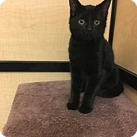 Adopt A Pet :: Cameron - Taylor, MI