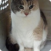 Adopt A Pet :: Missy - East Hanover, NJ