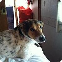 Adopt A Pet :: Omar - Alamosa, CO