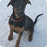 Adopt A Pet :: Walter - Rigaud, QC