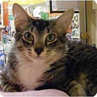 Adopt A Pet :: Camry - Woodstock, GA