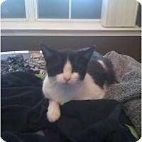 Adopt A Pet :: Frankie (Maze) - Mobile, AL