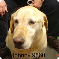 Adopt A Pet :: Johnny - baltimore, MD