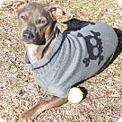 Adopt A Pet :: Johnathan (18 lb) More Pics!
