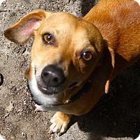 Adopt A Pet :: Fredrick - Sacramento, CA