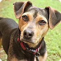 Adopt A Pet :: Sally - Knoxville, TN