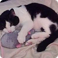 Adopt A Pet :: Panda - Merrifield, VA