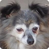 Adopt A Pet :: Cocoa - MINNEAPOLIS, KS