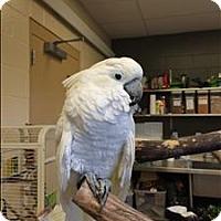Adopt A Pet :: Bubba - Monterey, CA