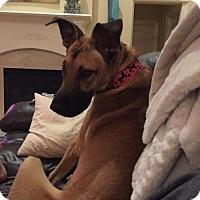 Adopt A Pet :: Lady(CL) - Greensboro, NC