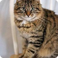 Adopt A Pet :: Mikey - Markham, ON