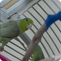 Adopt A Pet :: Peapod - Denver, CO