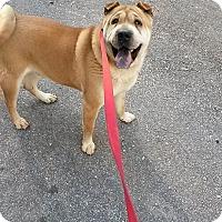 Adopt A Pet :: Tanner in GA - Mira Loma, CA
