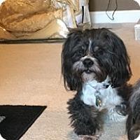 Adopt A Pet :: Marlo - Catharpin, VA