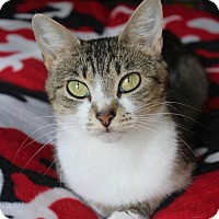 Adopt A Pet :: Bridget - Knoxville, TN