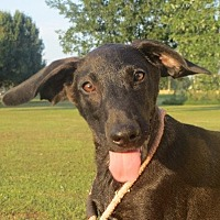 Labrador Retriever Mix Puppy for adoption in Greenville, Rhode Island - Ellis