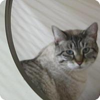 Adopt A Pet :: Luna/Twitter - Kingston, WA