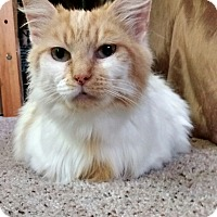 Adopt A Pet :: Mitzi - Cincinnati, OH