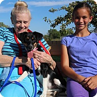 Adopt A Pet :: Molly - Elyria, OH