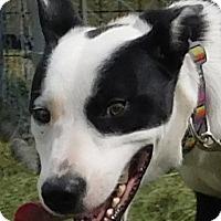 Adopt A Pet :: Reggie - MINNEAPOLIS, KS