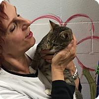 Adopt A Pet :: Tinnea - Manchester, CT