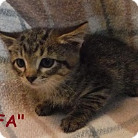 Adopt A Pet :: Fa - Batesville, AR