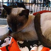 Adopt A Pet :: Scooter - Fischer, TX