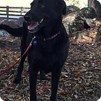 Adopt A Pet :: Evee - Penngrove, CA