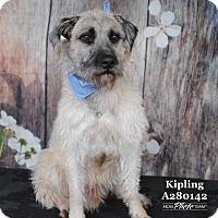 Adopt A Pet :: KIPLING - Conroe, TX