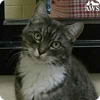 Adopt A Pet :: Laney - West Kennebunk, ME