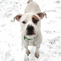 Adopt A Pet :: Carver - Sharon Center, OH