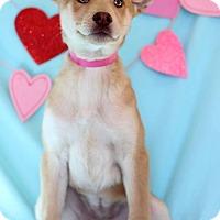 Adopt A Pet :: leslie - Waldorf, MD