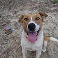 Adopt A Pet :: Kodak - Blountstown, FL