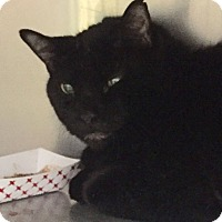 Adopt A Pet :: Gilgamesh - Manchester, NH
