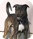 Shepherd (Unknown Type)/Hound (Unknown Type) Mix Dog for adoption in Tinton Falls, New Jersey - Spike