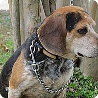 Adopt A Pet :: DEPUTY - Humboldt, TN
