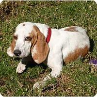 Adopt A Pet :: Sadie - Palm Bay, FL