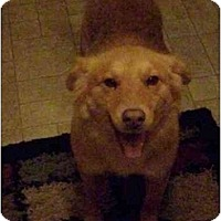 Adopt A Pet :: Leila (Flagstaff) - Scottsdale, AZ