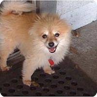 Adopt A Pet :: Baily - Orlando, FL