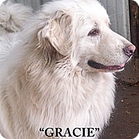 Adopt A Pet :: Gracie - Cambridge, IL