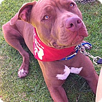 Adopt A Pet :: NAVEEN - Carpenteria, CA