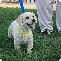 Adopt A Pet :: Toby - California City, CA