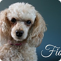 Adopt A Pet :: Fiona - Toronto, ON