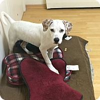Adopt A Pet :: Ricky in CT - East Hartford, CT