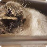 Adopt A Pet :: Primrose - Cochran, GA
