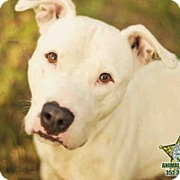 Adopt A Pet :: DENALI - Tavares, FL