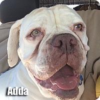Adopt A Pet :: Adda - Encino, CA